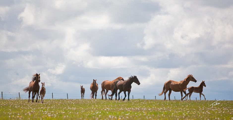 OUR BROODMARES